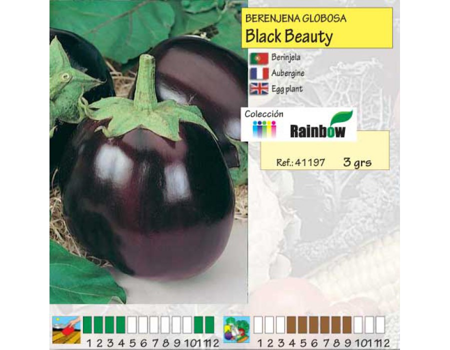 Semillas mascarell berenjena black beauty